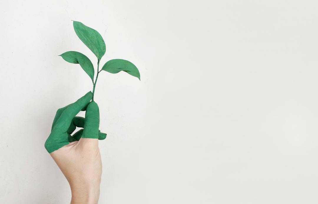 Marketing-Verde